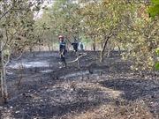 Cháy lớn thiêu rụi 3 ha điều đang thu hoạch ở Lộc Ninh, Bình Phước