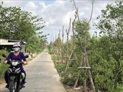Hàng trăm cây xanh mới trồng đã bị chết khô