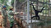 Cứu hộ động vật hoang dã quý hiếm ở Vườn Quốc gia Bù Gia Mập
