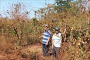 Khẩn trương xây dựng phương án bồi thường cho các hộ dân ở huyện Chư Sê bị thu hồi đất
