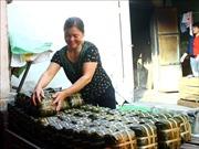 Làng nghề làm bún Vĩnh Hòa tất bật nấu bánh chưng vụ Tết