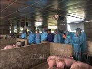 Hà Nội khẩn trương phòng chống dịch bệnh tả lợn châu Phi
