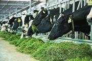 Việt Nam có thêm 1 nhà máy sữa đủ điều kiện xuất khẩu vào Trung Quốc