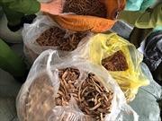Tạm giữ hàng trăm tấn thuốc bắc nghi nhập lậu tại Ninh Hiệp