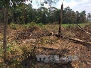 Hai người bị chém nhập viện khi tham gia đoàn giải tỏa đất rừng bị lấn chiếm