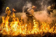 Vì sao quá nhiều người mất tích trong thảm họa cháy rừng California