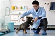 Trung Quốc nhân bản vô tính chó cảnh sát