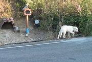 Chú chó trung thành quanh quẩn tại nơi chủ qua đời suốt 18 tháng