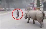 Tê giác truy đuổi người không chấp hành phong tỏa chống COVID-19