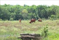 'Long đong' dự án Safari và khu nhà ở Đại học Quốc gia