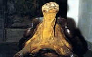 Phát hiện mẫu vật sống của loài rùa khổng lồ được cho đã tuyệt chủng