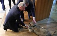 'Người bạn bốn chân' - Món quá ý nghĩa lãnh đạo Serbia tặng Tổng thống Nga Putin
