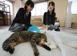 """Tranh cãi quanh """"cà phê mèo"""" ở Nhật Bản"""