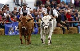Đến Đức xem hội đua bò