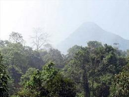 Hà Nội cần 1.500 tỷ đồng để quy hoạch rừng