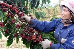 Tănggiá trị cho cà phê Việt
