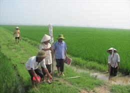 Năm 2013, Hà Nội sẽ dồn điền đổi thửa xong