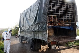 Khống chế kịp thời ổ dịch H5N1 tại Cần Thơ