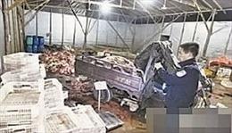 40 tấn thịt lợn chết bệnh tuồn ra thị trường