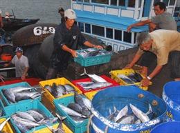 Mạnh về biển, làm giàu từ biển - Bài 2: Mô hình thương hiệu biển Việt Nam