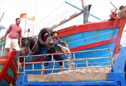 Khai thác bền vững lợi thế biển đảo Nghi Sơn-Bài cuối: Để Cảng cá Lạch Bạng là 'Bến đỗ bình yên'