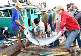 Hỗ trợ ngư dân khai thác theo tổ đội