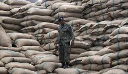 Chương trình trợ giá 'phủ bóng đen' lên xuất khẩu gạo Thái Lan
