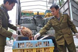 Bắt xe chở 1 tấn gà thải từ Trung Quốc
