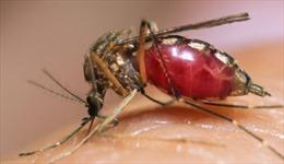 Video rợn tóc gáy về cú hút máu của muỗi