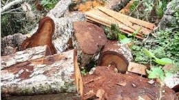 Rừng đầu nguồn Ngàn Me bị tàn phá nghiêm trọng