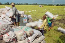 Philippines dự kiến nhập khẩu 100.000 tấn gạo từ Việt Nam, Thái Lan