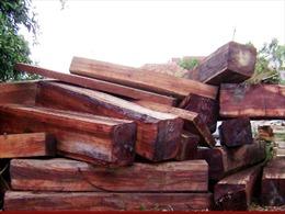 Bắt 2 xe ô tô chở trên 13 m3 gỗ lậu