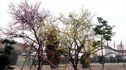 Cây hoa ghép đạt kỷ lục Guiness Việt Nam và Châu Á tại AdAsia 2013