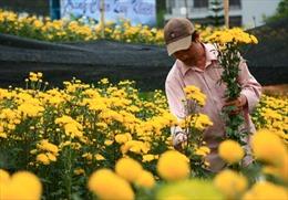 Thêm 5 loại hoa Đà Lạt được chứng nhận độc quyền