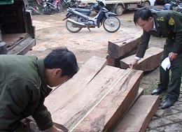 Liên tiếp bắt nhiều vụ vận chuyển gỗ trái phép