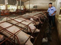 Bảo đảm đủ thực phẩm sạch cho thị trường Tết