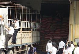 Hơn 3.300 tấn cà phê cầm cố, thực tế chỉ còn gần 700 tấn