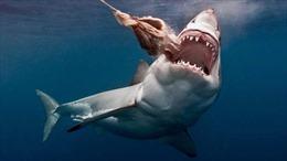 Australia lập các khu 'tiêu diệt' cá mập
