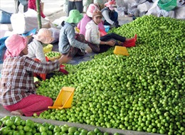 Bảo vệ thương hiệu nông sản Việt Nam
