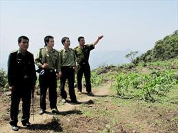 Để những cánh rừng Hà Giang thêm xanh