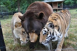 Những tình bạn khó tin trong thế giới động vật
