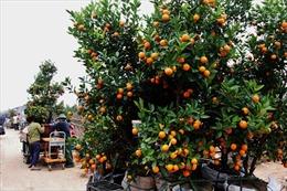 Quảng Ninh hỗ trợ tiêu thụ hàng hóa cho nông dân