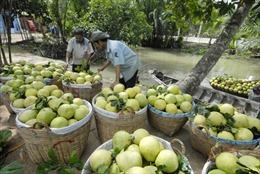 Trà Vinh: Nhà vườn bội thu trái cây bán Tết