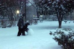 Mưa tuyết kỷ lục ở Nhật Bản, hơn 600 người thương vong