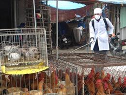 Phân vùng nguy cơ để kiểm soát, phòng chống bệnh cúm gia cầm