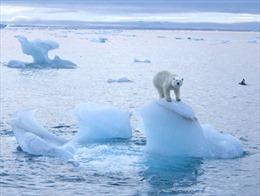 Băng Bắc Cực chuyển màu