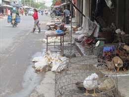 Tiềm ẩn nguy cơ lây lan dịch cúm gia cầm từ các chợ dân sinh