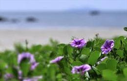 Trường Sa muống biển nở hoa