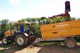 Xuất khẩu cà phê của Brazil tăng bất chấp hạn hán