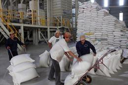 Tìm kiếm thị trường tiêu thụ lúa gạo